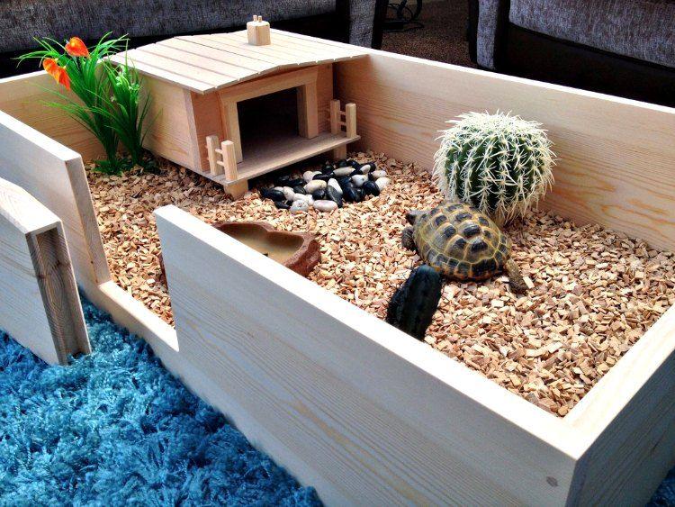 Como hacer un terrario para tortugas terrario for Habitat decoracion
