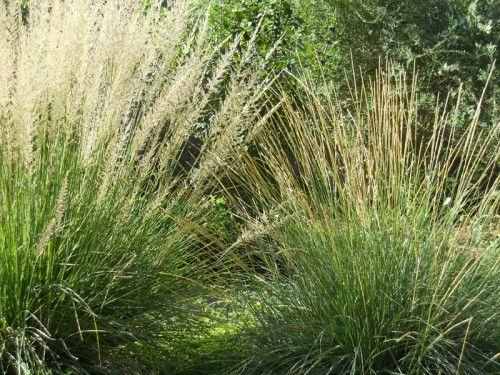 Native garden design Austin Texas Central Texas Gardener | Gardening ...