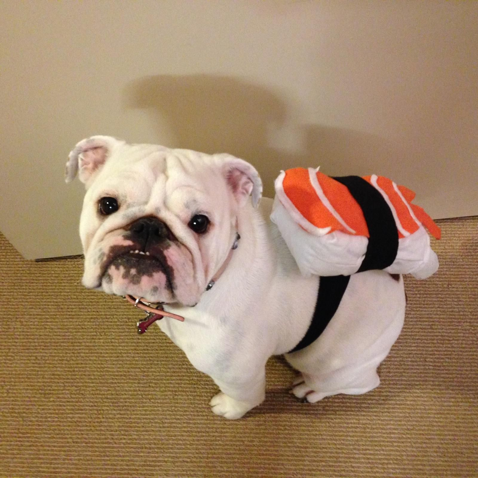Blog Bulldog Halloween Costumes Dog Halloween Costumes Pet