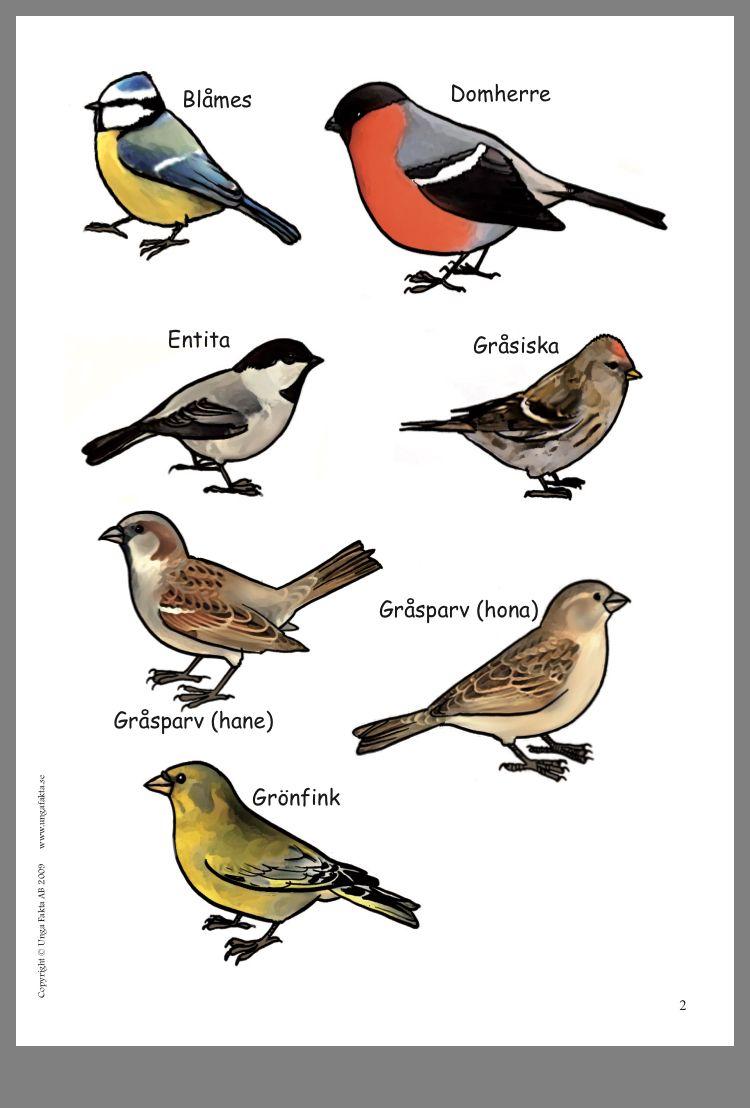 bilder på svenska fåglar