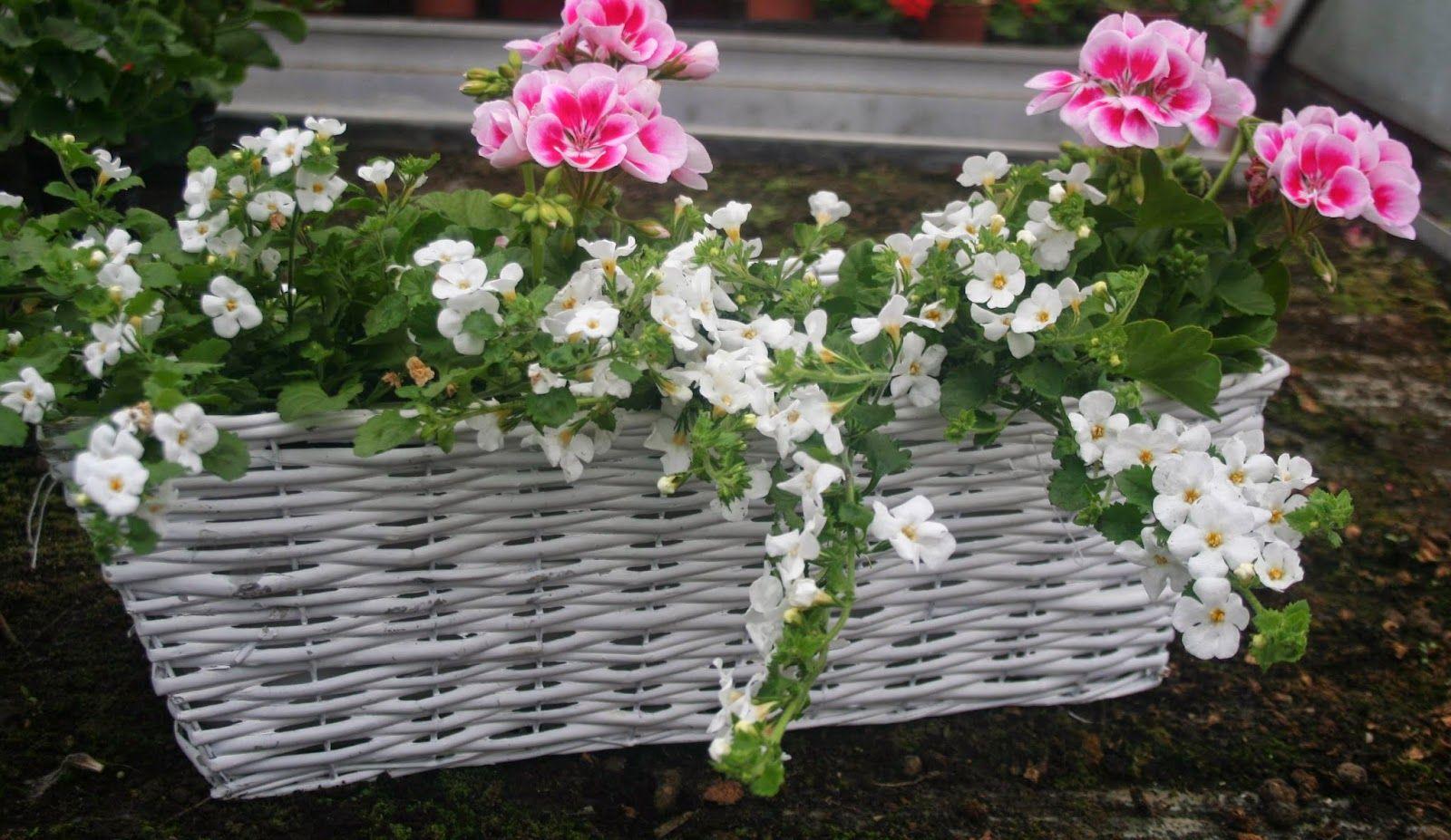 Smak życia Kompozycje Kwiatowe Na Balkon I Do Ogrodu