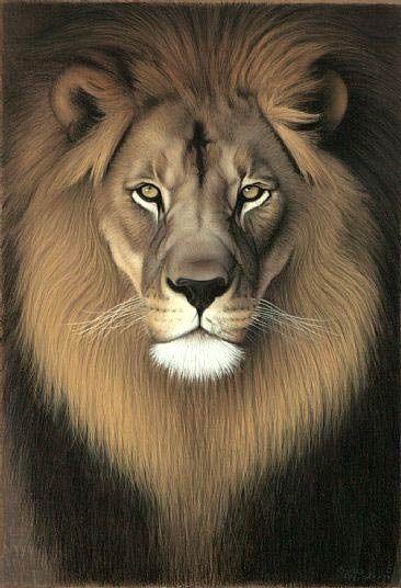 Leon Pirograbado Con Color Dibujos De Leones Leones Animales