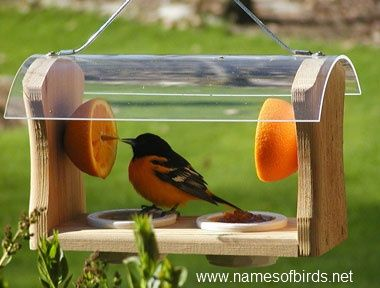 how to make oriole food