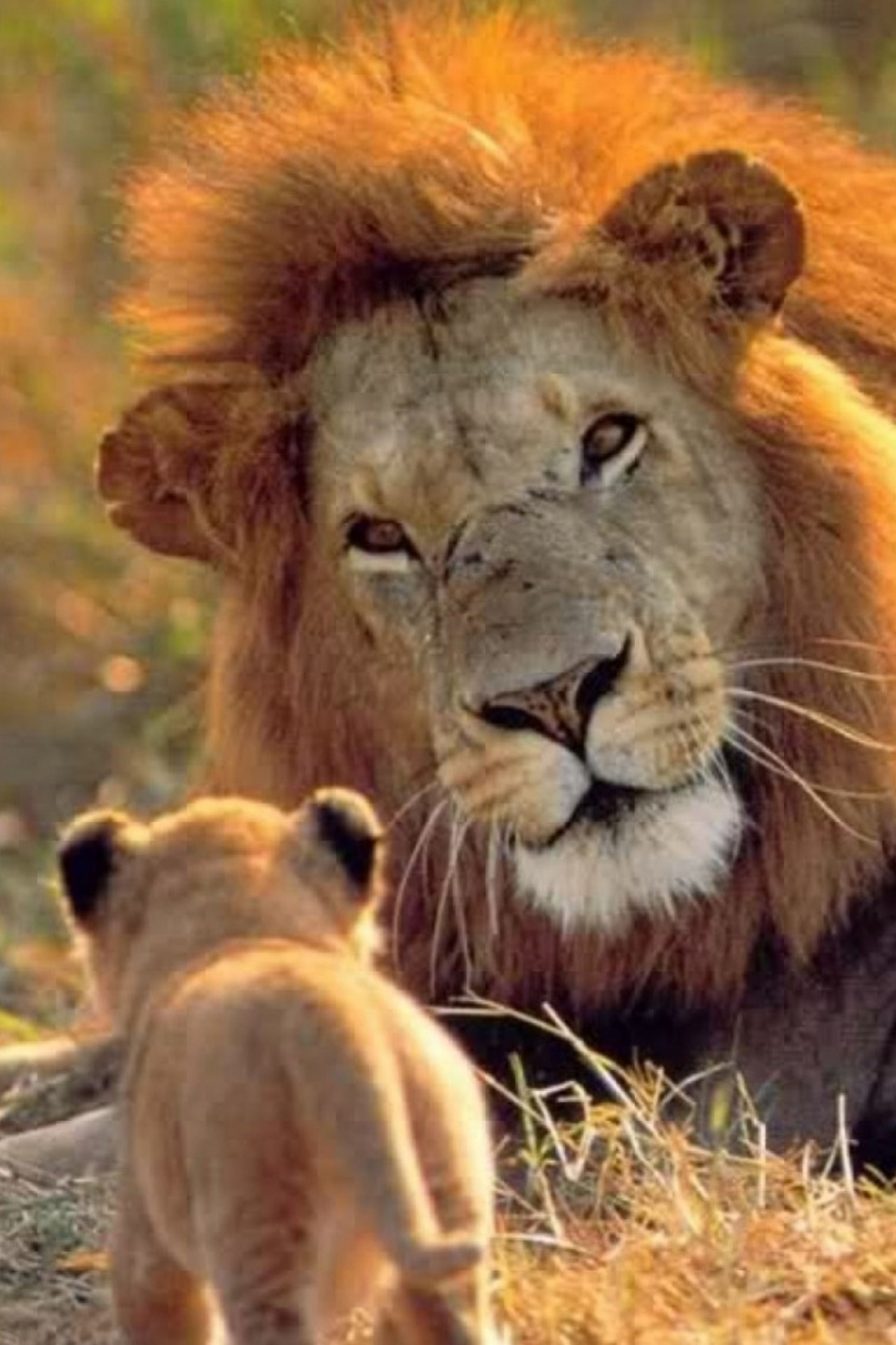 Pin By Diane Kalas On Animaux Sauvages Animals Beautiful Animals Wild Lions