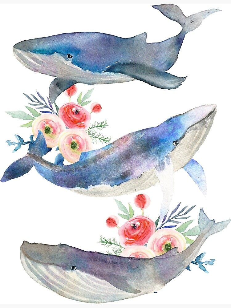 Watercolor Whales And Flowers Poster By Southprints In 2021 Whale Watercolor Illustration Watercolor Whale Whale Painting