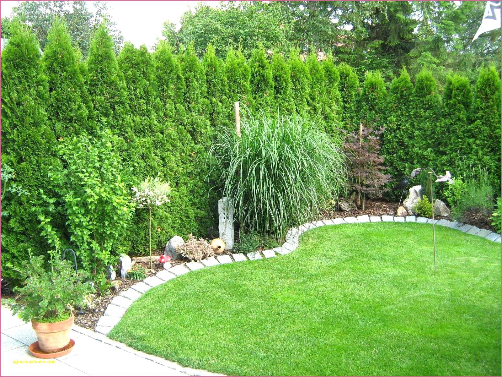 Pin Auf Landscaping Plants And Features