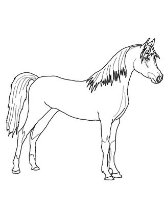arabian horse coloring page with images  horse coloring