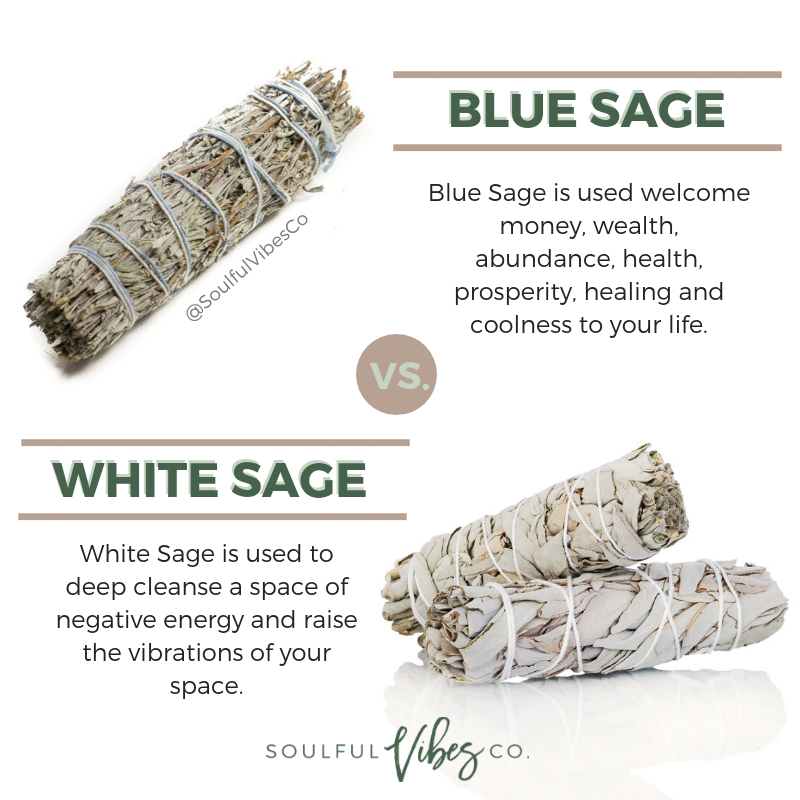 Blue Sage Vs White Sage Both Are Amazing And Serve Great Purposes But It S Important To Know The Difference For Your Sp Herbal Magic Healing Herbs Herbalism