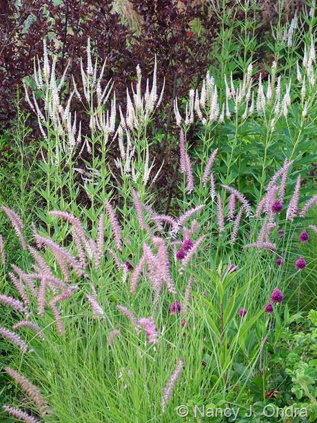 What S In A Name Where In The World Plant Combinations Flower Garden Ornamental Grasses