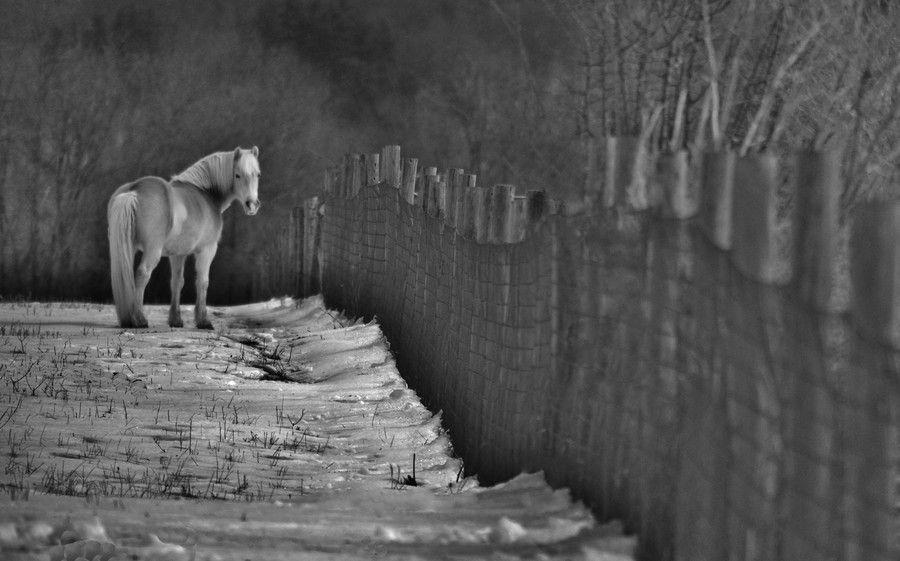 One Trick Pony by Bob Geary on 500px