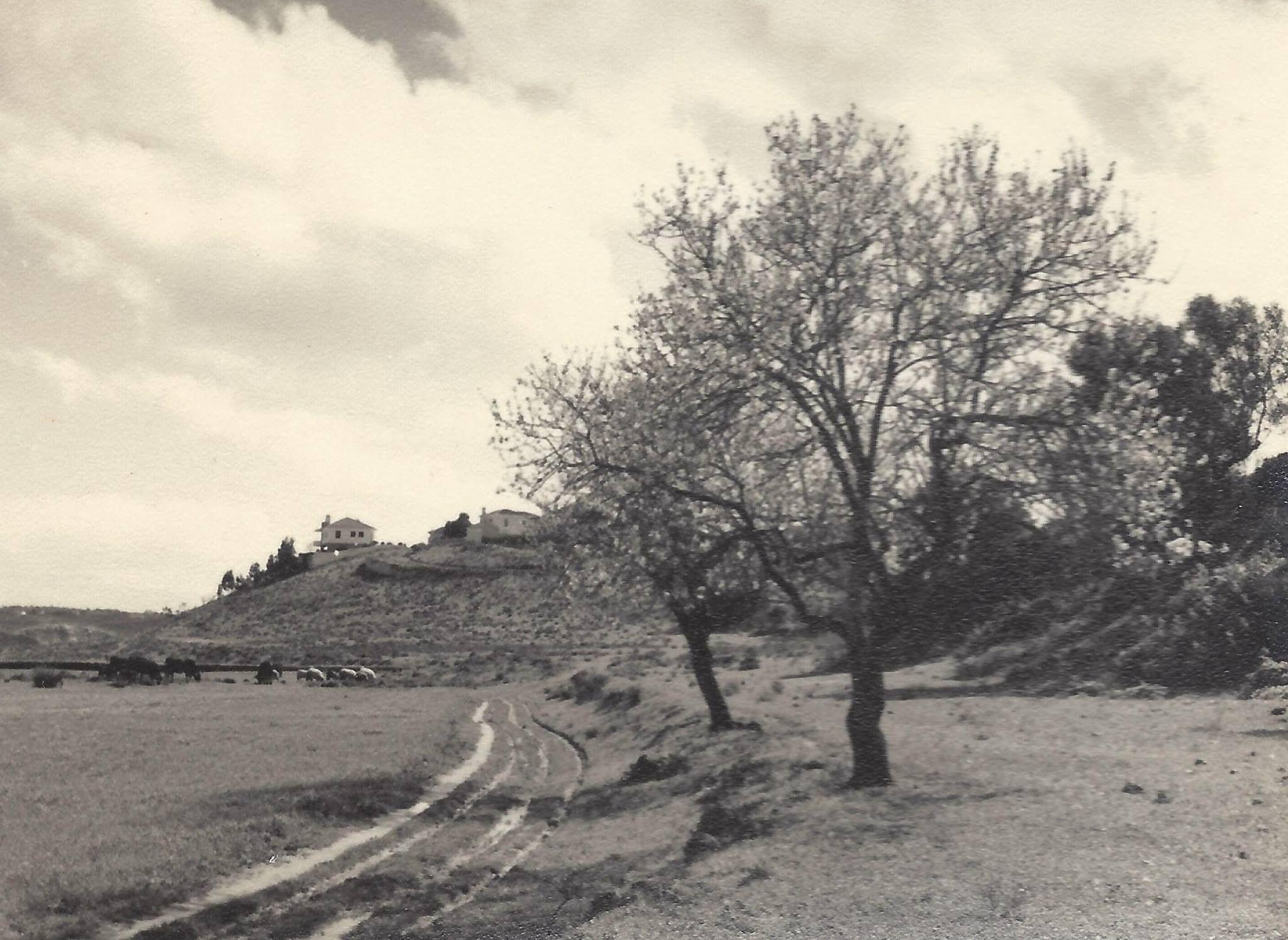 Ponta da areia nos anos 1950