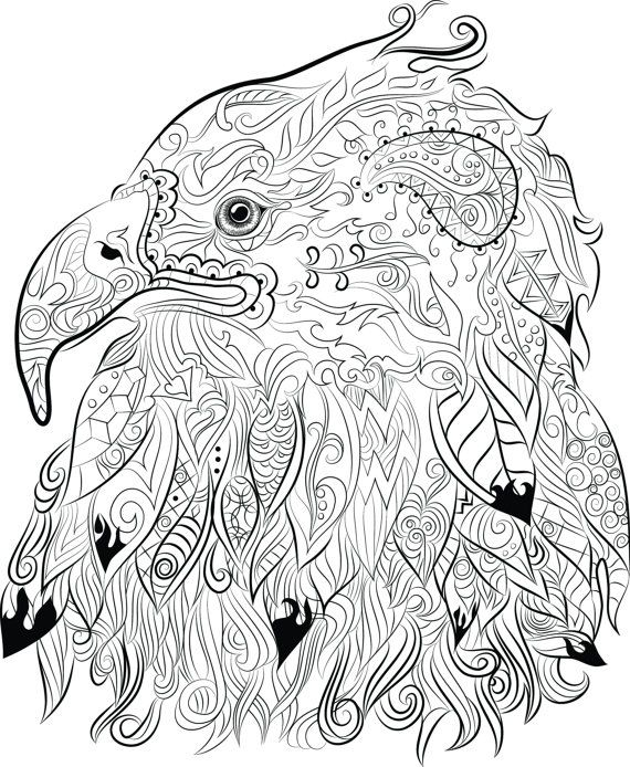 Pin On Coloring Birds Of Prey