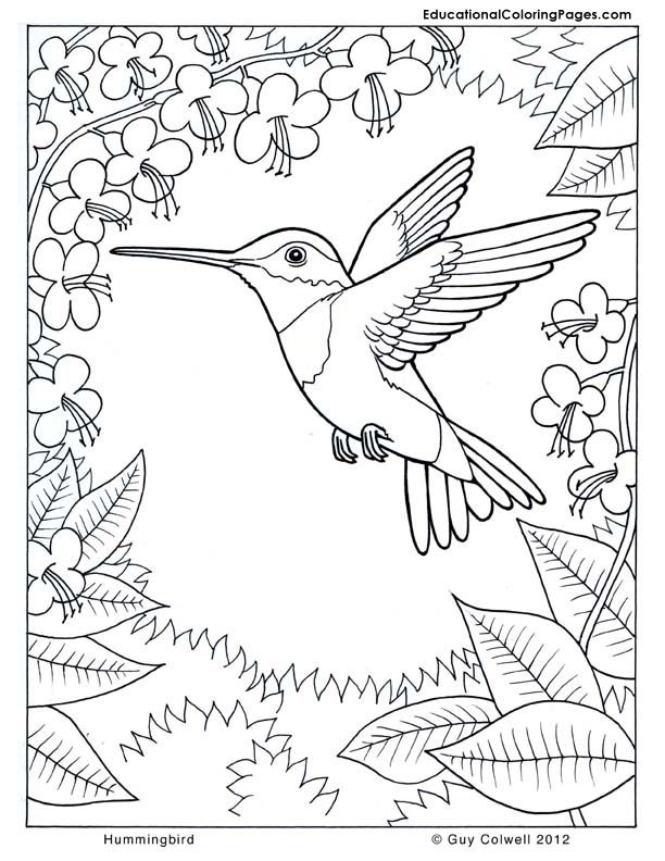 Coloring Pages Hummingbirds Hummingbird Flower Nature