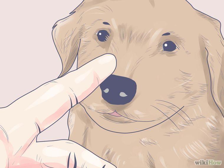 Discipline a New Puppy #newpuppy