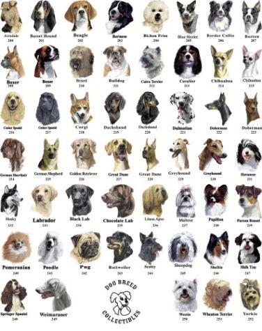 Types of dogs with images
