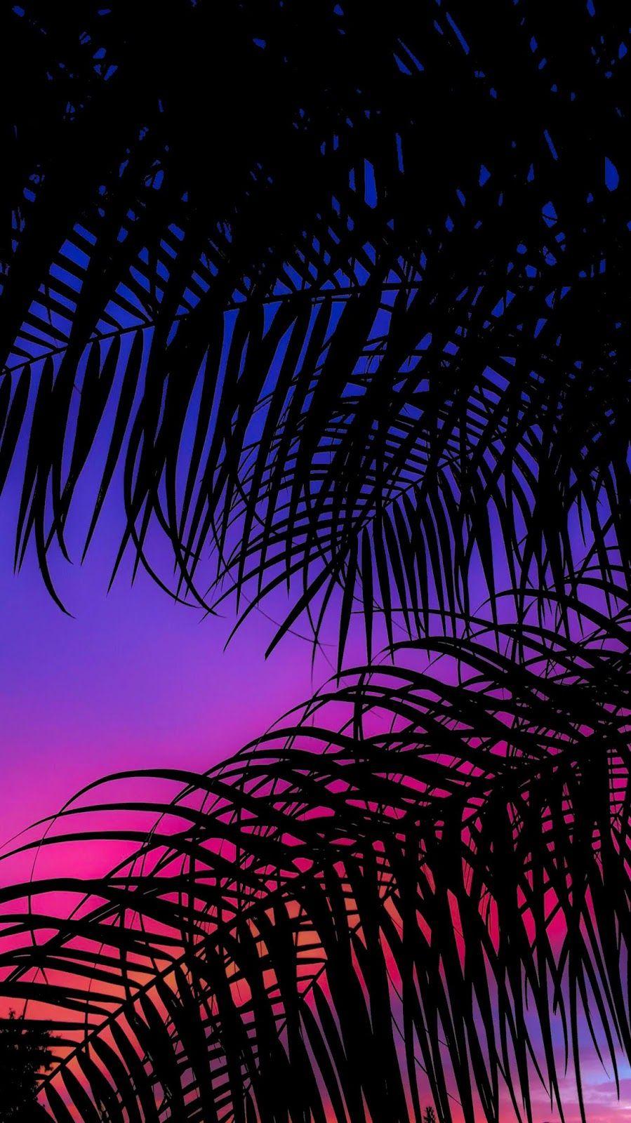 Palms Evening Wallpaper in 2020 Iphone wallpaper sky