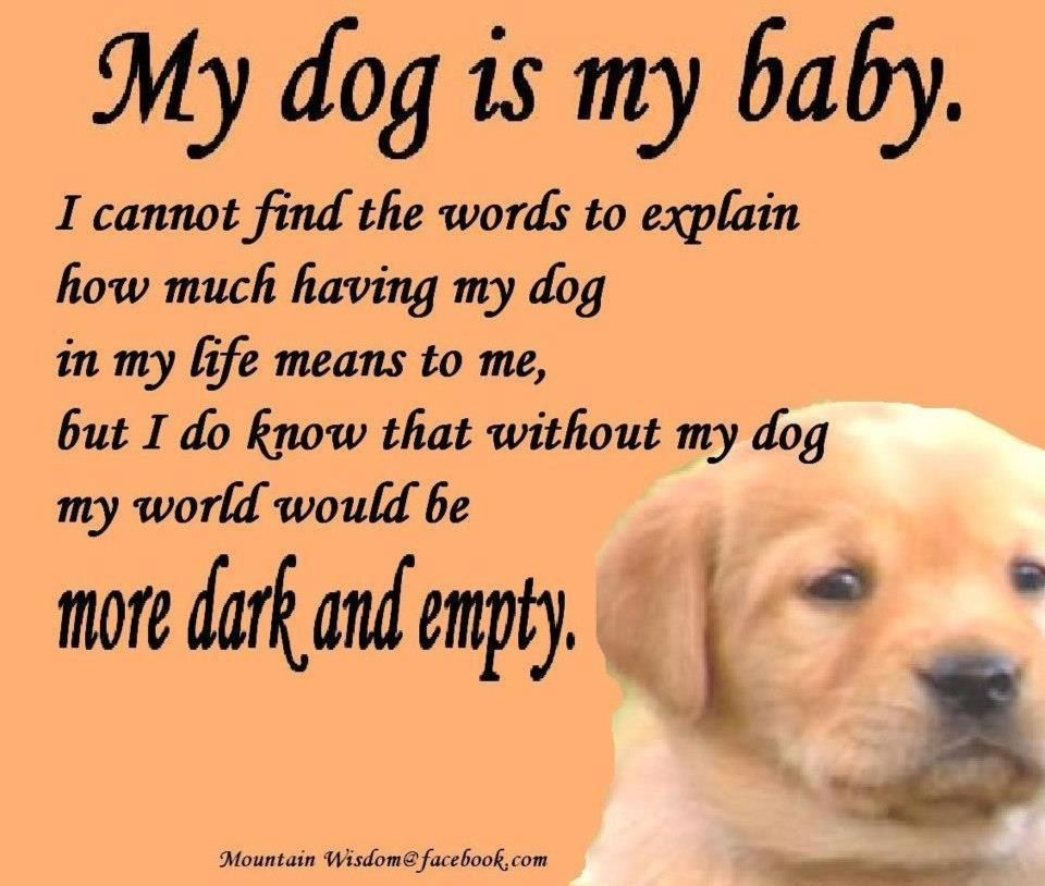 I Love My Dog Quotes Interesting My Dog Is My Baby  Man's And Woman's Best Friend  Pinterest
