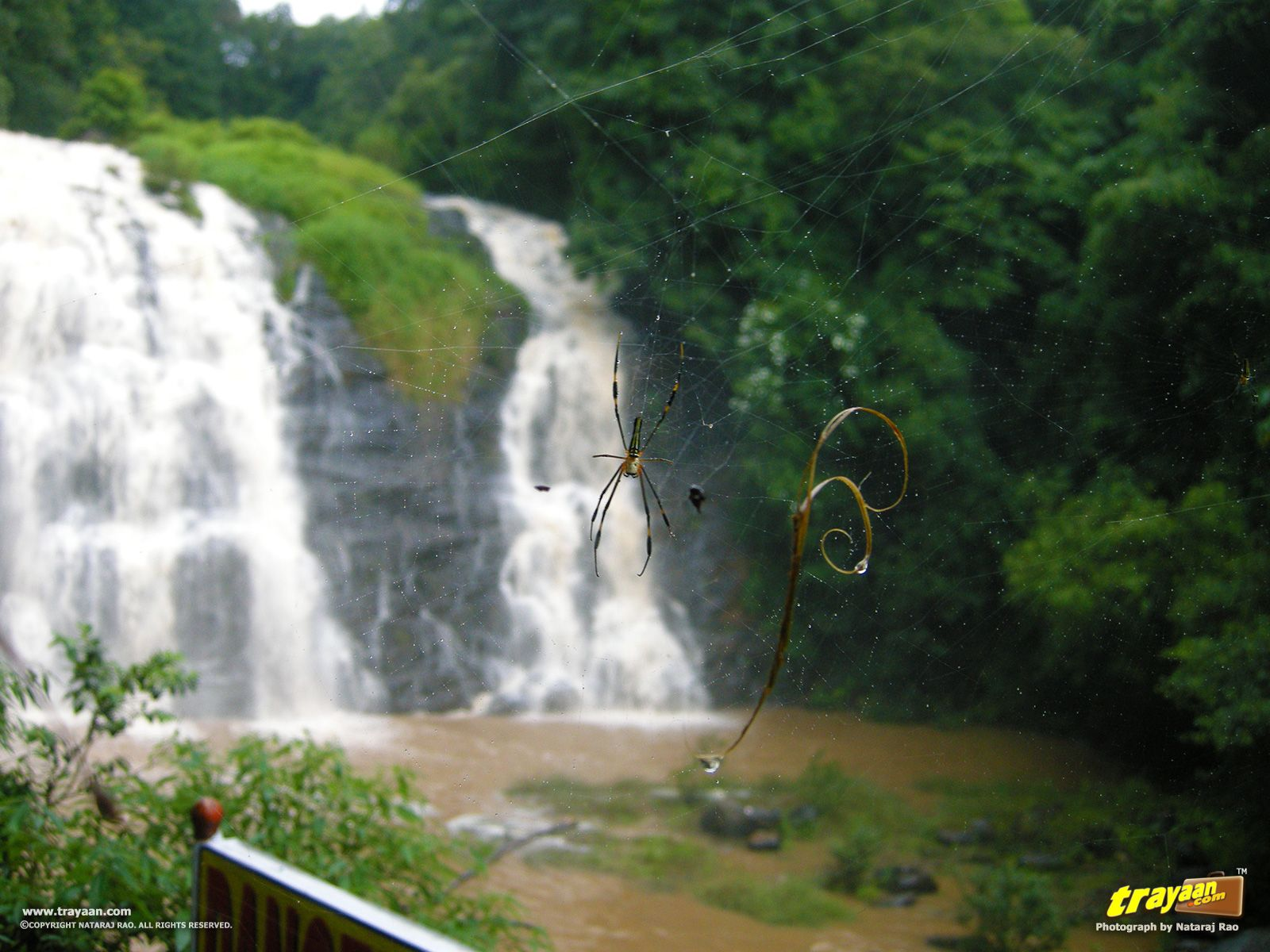 A trip to during Monsoon Trip, Western ghats, Monsoon