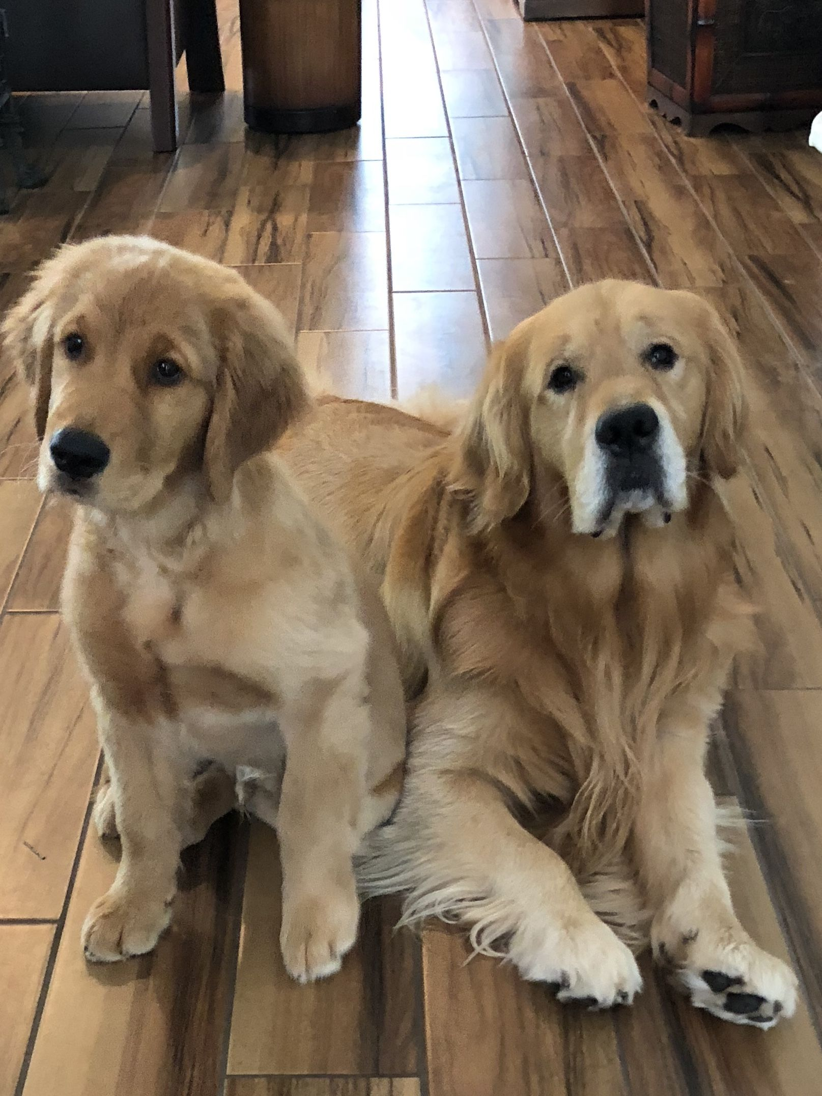 Golden retrievers always dogs pinterest dogs puppies and dogs