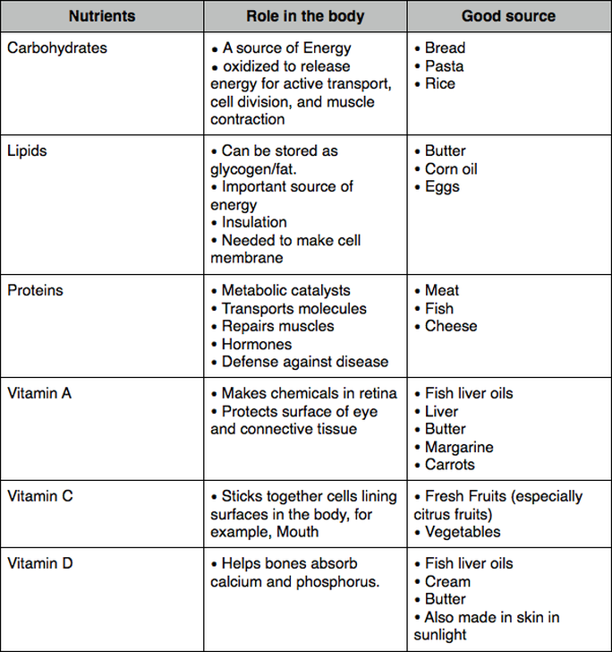 Image Result For Nutrients Carbs Proteins Lipids