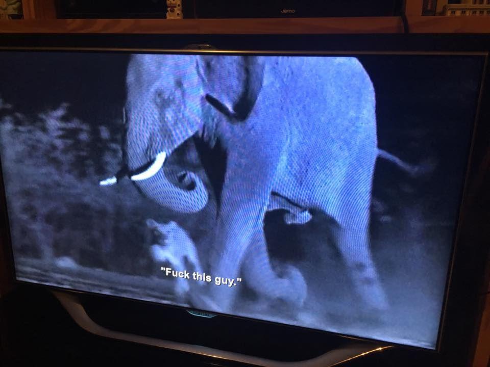 Netflix glitch causes BBC nature documentary to get Aziz