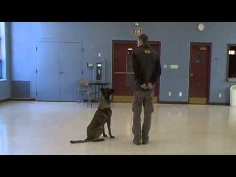 Tyler Muto Competition Heeling Episode 3 Dog Training Dog