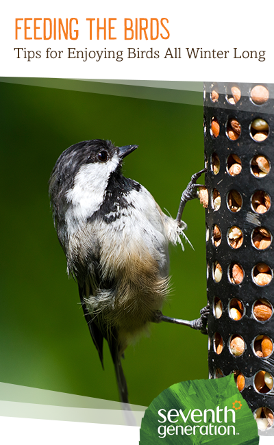Not all birds head south in the winter! Learn which birds to feed - and how - so you can enjoy them during the cooler months.