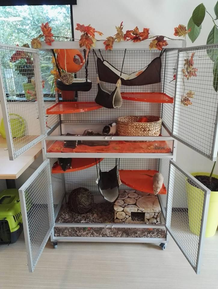 Aluminum fall rat cage theme critter nation lookalike
