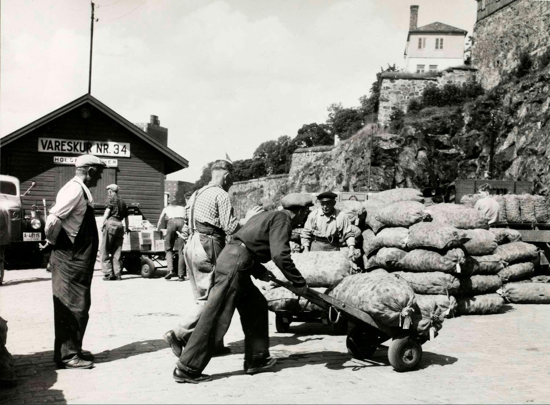 Oslo Havnearbeidere i jobb 1954 Stor nyvinning med gummihjul når tunge sekker skal forflyttes.