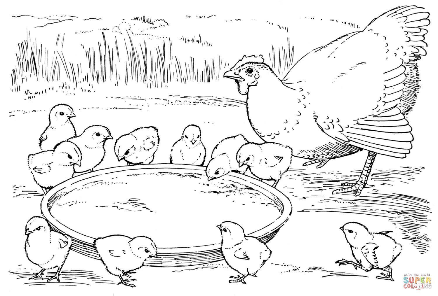 Hen And Chicks Super Coloring Farm Animal Coloring Pages Chicken Coloring Pages Coloring Pages