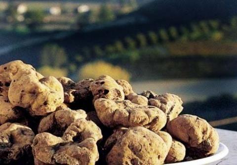 Fiera Tartufo White truffle #truffle #whitetruffle #amazing #taste #unique #fine #precious #select