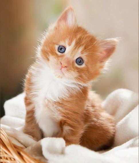 The Most Popular Kitten Names Of 2015 We Love Cats And Kittens Kittens Cutest Baby Animals Cute Baby Animals