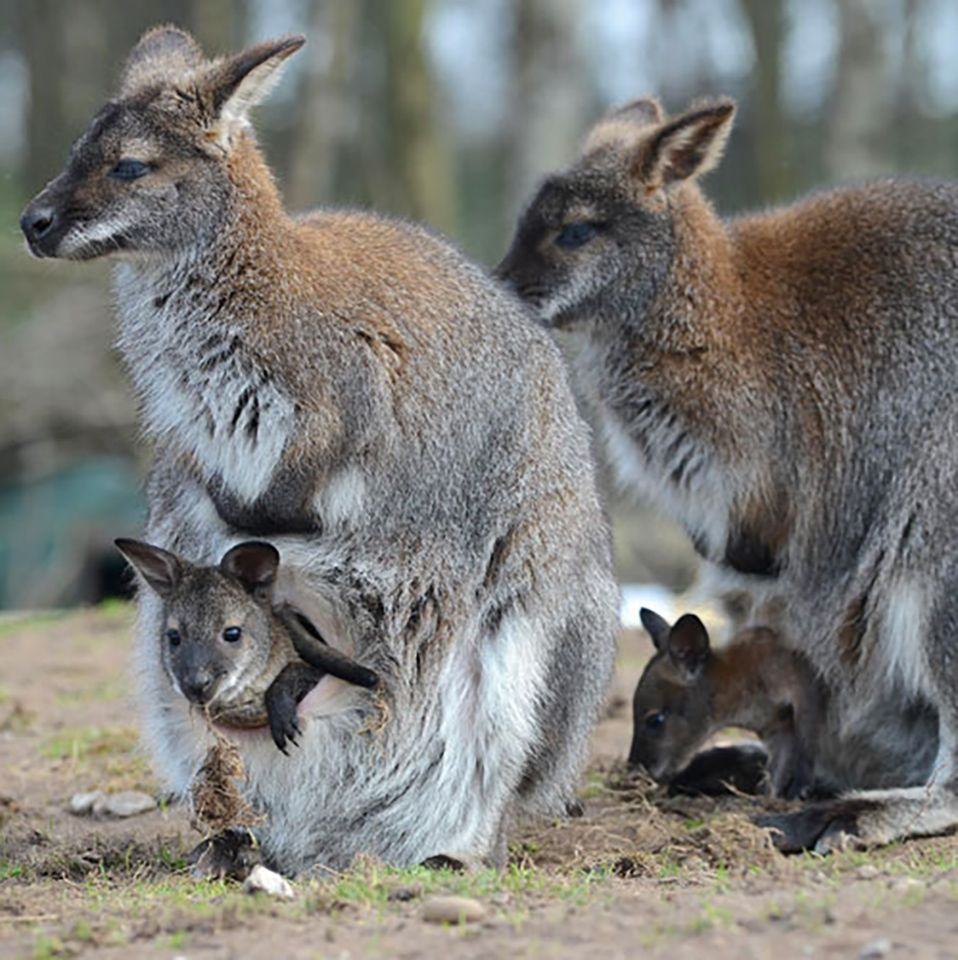 Cutest Australian Animals And Where To Find Them in 2020