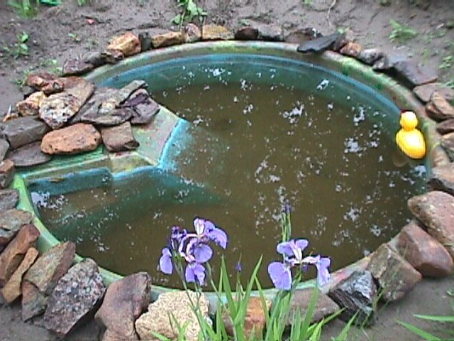 Kiddie Pool Turned Into Garden Pond Kiddie Pool Diy Pond Garden Pond