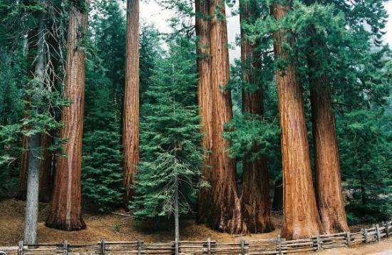 Hotels Near Kings Canyon National Park California