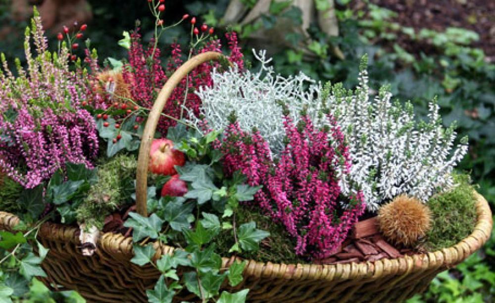 Heide: Pfiffige Deko-Ideen für den Herbst #wintergardening