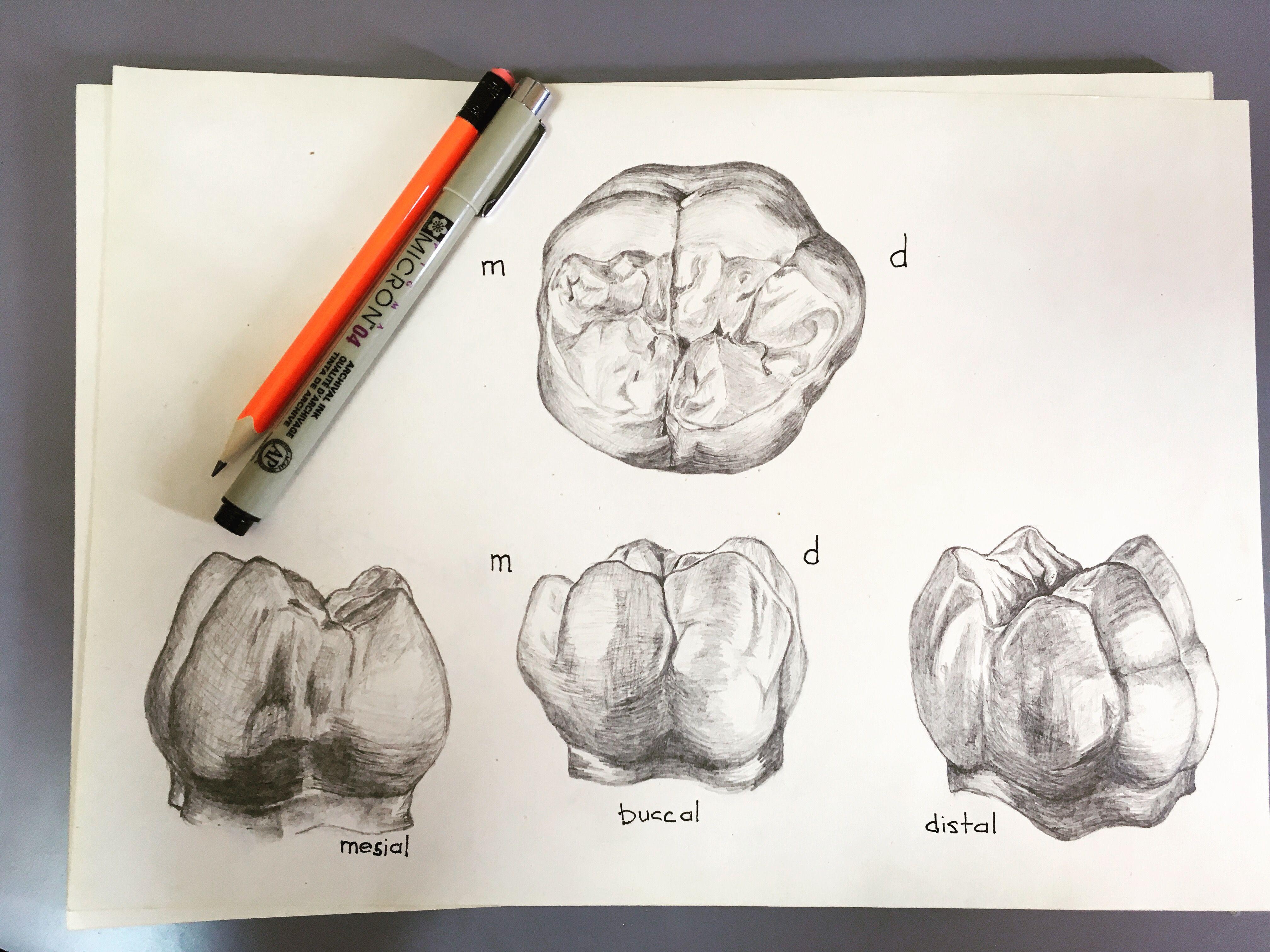 Pin de Piter en Стоматология | Pinterest | Odontología, Dental y Dientes