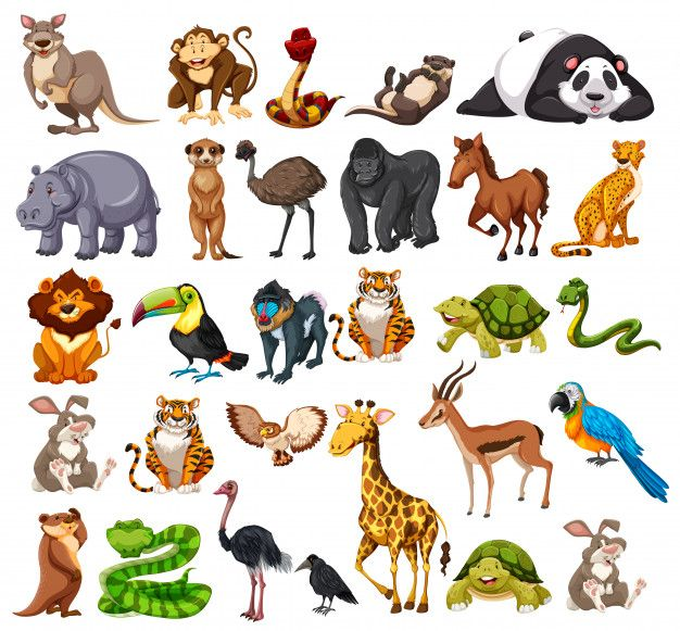 Different Types Of Wild Animals On White Animals Wild Animal Illustration Kids Cartoon Drawings Of Animals