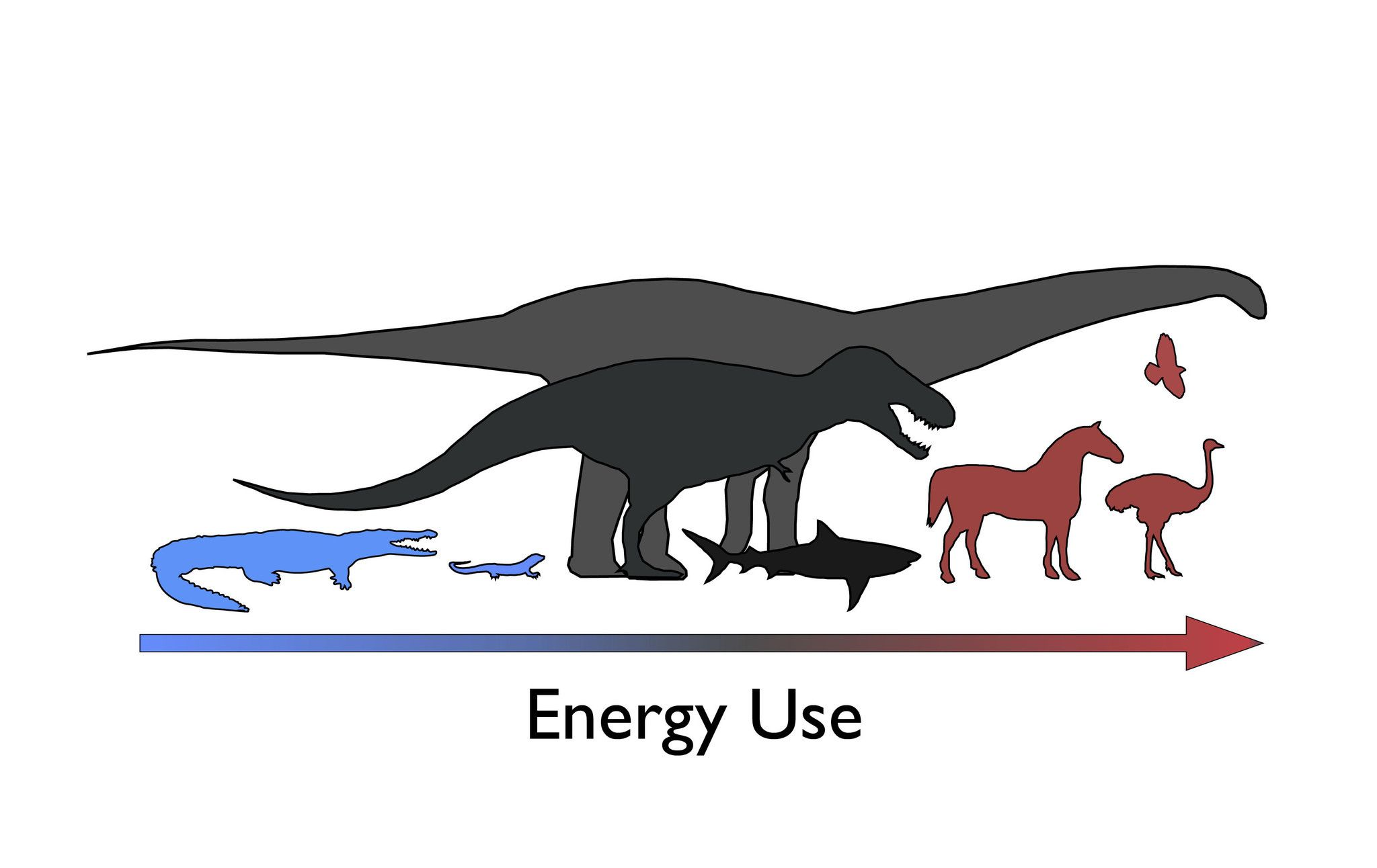 Dinosaurs Were Neither Cold Blooded Nor Warm Blooded