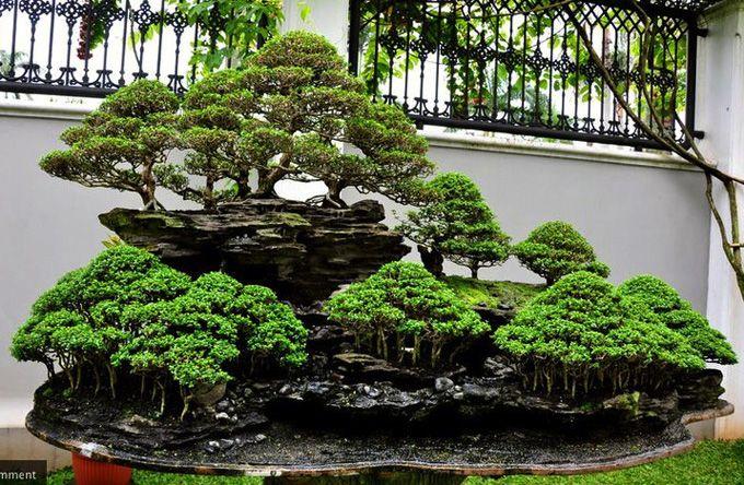 bonsai trees images pictures | Bonsai tree: Bonsai Mania