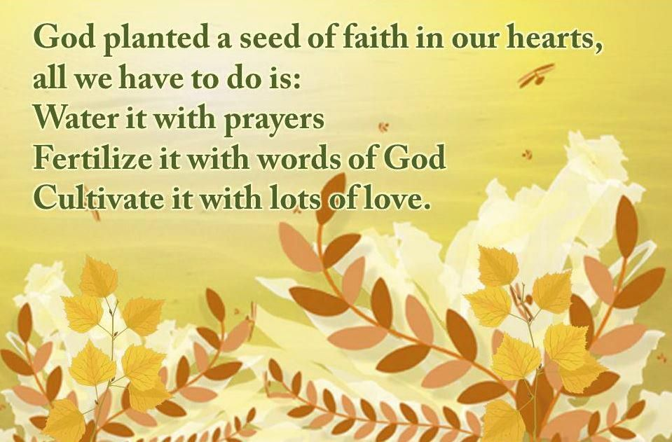 Image result for planting seeds of faith