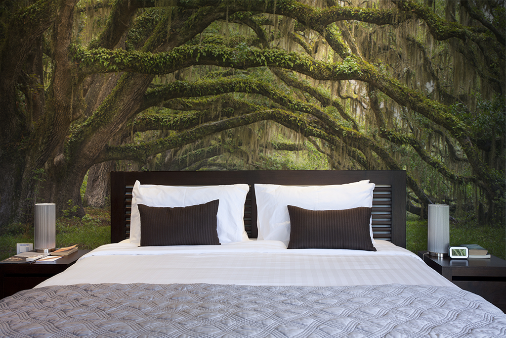 Oak Tree Forest Wall Mural Forest wall mural, Luxury