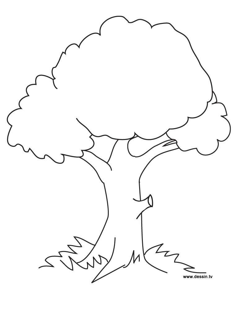 Tree Coloring Page Ready To Be Printed Preschool Fall Kindergarten Tree Coloring Page