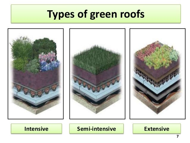 Intensive Vs Extensive Green Roof Green Roofs Green Roof Extensive Green Roof Roof