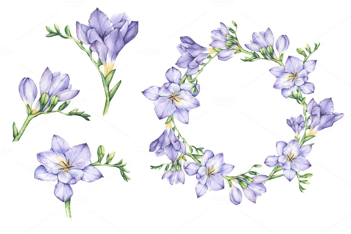 Set Of Watercolor Hand Drawn Freesia Flowers Flower Drawing Flower Illustration Freesia Flowers
