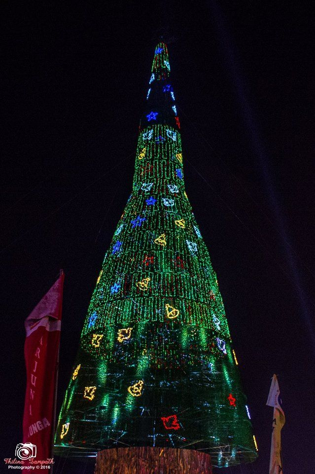 worlds tallest christmas tree colombo 2016 - Worlds Tallest Christmas Tree