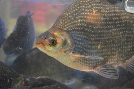 Tilapia? Trout? Learn which species of fish thrive in an ...