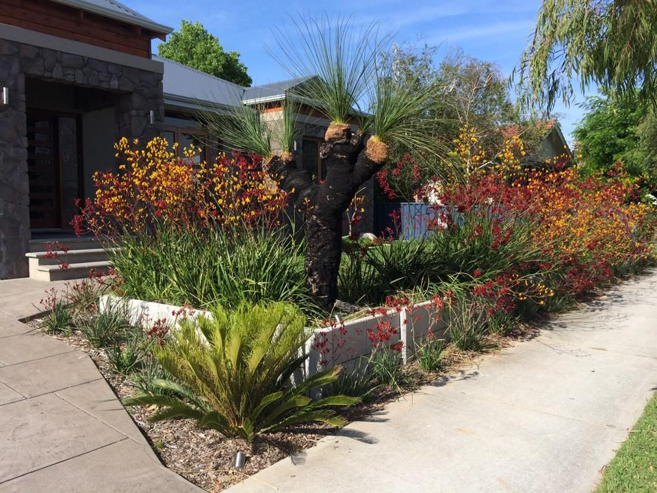 native australian plants  kangaroo paws and grass tree  landscape design  native garden  perth