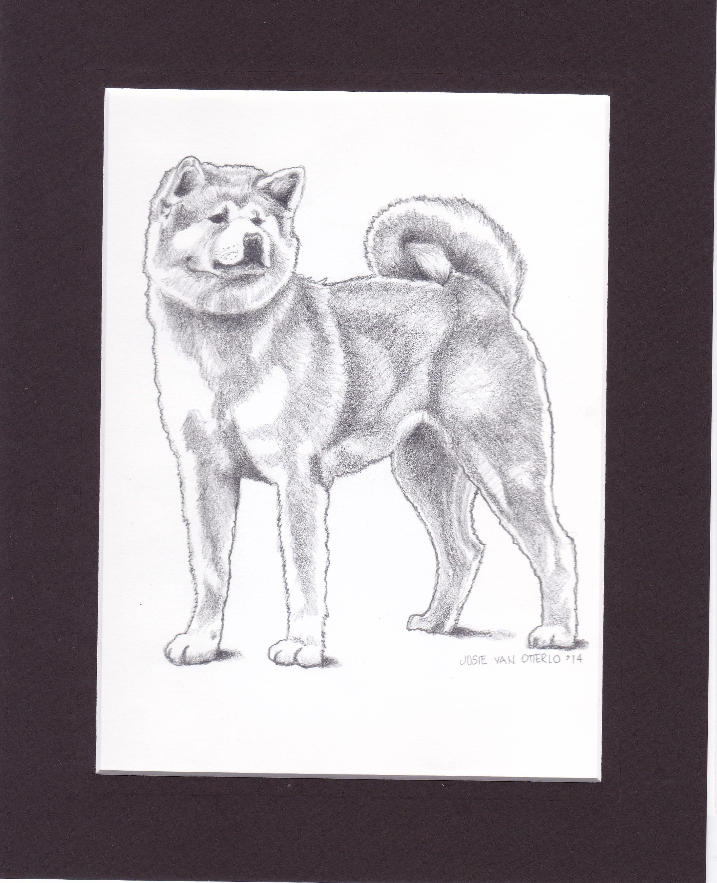 This is a pencil drawing i did of a red akita inu that i will donate this is a pencil drawing i did of a red akita inu that i will donate nvjuhfo Choice Image