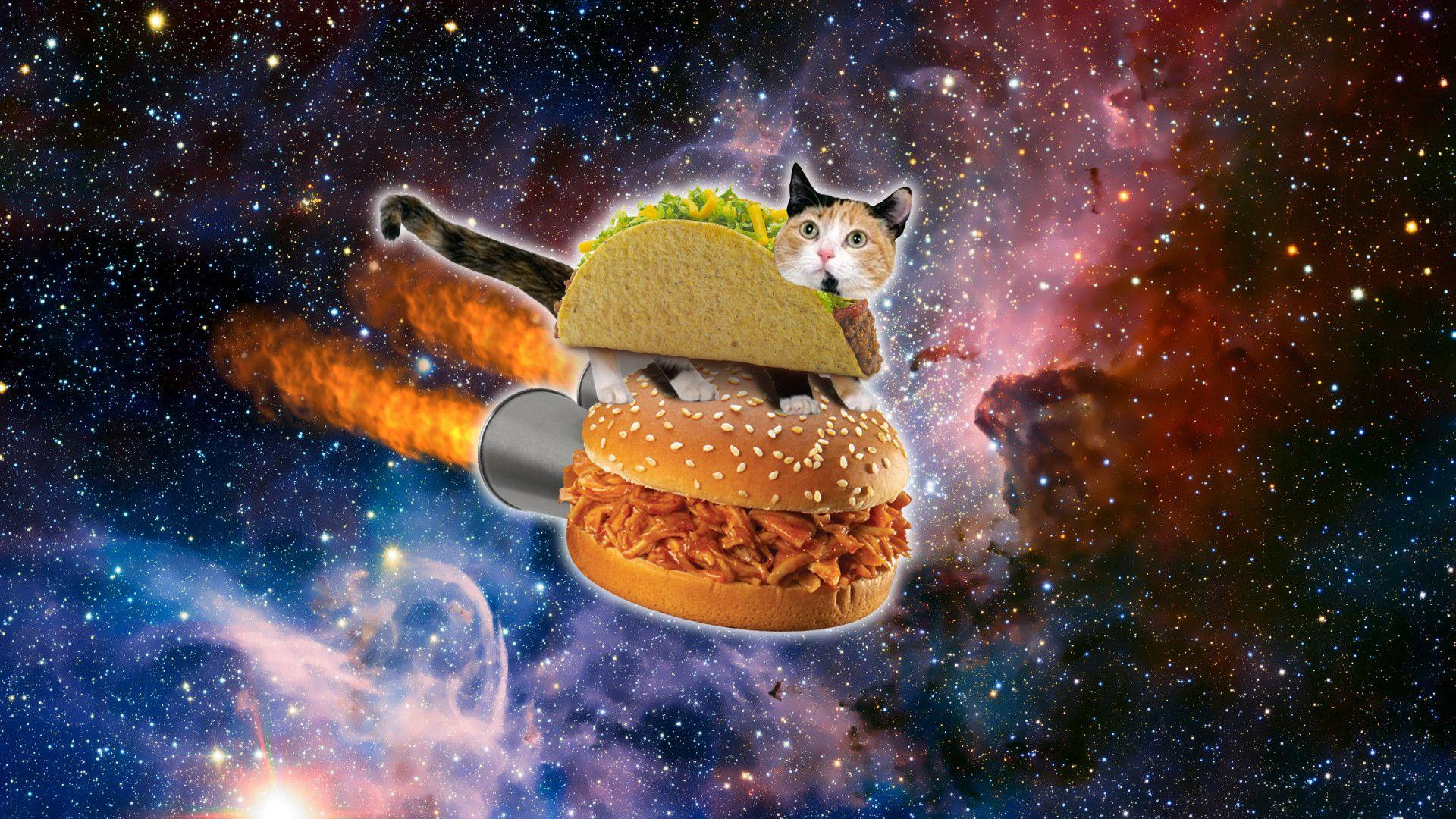 Res 1920x1080 Space Cat Wallpaper Mobile Taco Cat Cat Wallpaper Space Cat